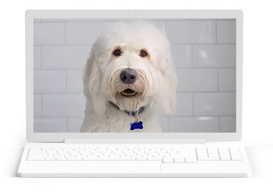 macbook dog2